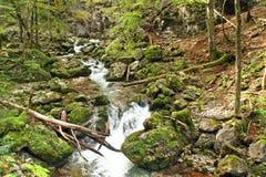Romantisch Forest Creek Royalty-vrije Stock Afbeeldingen