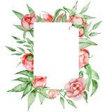 Romantisch kader met het malplaatje van de bloemenkaart Waterverfpioenen met groene bladeren op de witte achtergrond Hand getrokk stock afbeelding
