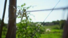 Romantisch landelijk landschap met groen gebied bij daglicht Wasknijpers op kabel stock videobeelden