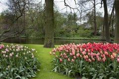 Romantisch landschap met tulpen stock afbeeldingen
