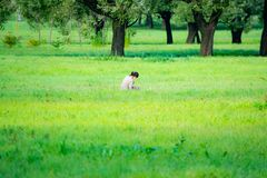Romantisch landschap, verse lucht, open platteland stock foto's