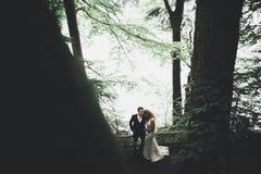 Romantisch, Märchen, glückliche Jungvermähltenpaare, die in einem Park, Bäume im Hintergrund umarmen und küssen lizenzfreie stockbilder