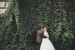 Romantisch, Märchen, glückliche Jungvermähltenpaare, die in einem Park, Bäume im Hintergrund umarmen und küssen lizenzfreie stockfotos