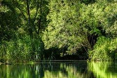 Romantische aard van de rivieralluviale gebieden van Donau Royalty-vrije Stock Foto's