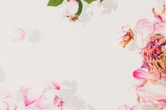 Romantische Abstraktion Blumenblätter von verwelkten Rosen auf weißem backgrou Stockbild