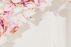 Romantische Abstraktion Blumenblätter von verwelkten Rosen auf weißem backgrou Lizenzfreie Stockfotografie