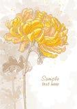 Romantische achtergrond met chrysant Stock Afbeelding