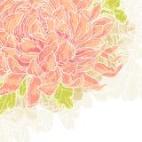 Romantische achtergrond met chrysant Royalty-vrije Stock Foto