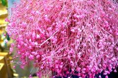 Romantische achtergrond van mooie roze droge lavendel Stock Fotografie