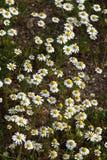 Romantische bloemen Stock Foto