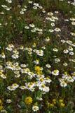 Romantische bloemen Stock Afbeeldingen