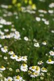 Romantische bloemen Royalty-vrije Stock Afbeeldingen