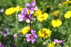 Romantische bloemen Stock Afbeelding