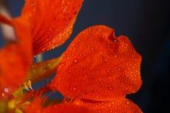 Romantische bloemen Royalty-vrije Stock Afbeelding