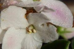 Romantische bloemen Stock Fotografie
