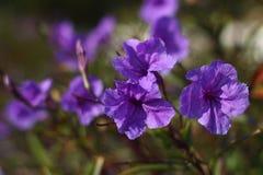 Romantische bloemen Royalty-vrije Stock Foto's