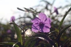 Romantische bloemen Stock Foto's