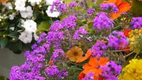 Romantische bloemen in Pont LÂ'Eveque, oud dorp in Normandië Frankrijk stock videobeelden