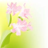 Romantische bloemenachtergrond Stock Fotografie