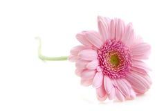 Romantische Blume stockbild