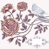 Romantische Blumenkarte mit Weinleserosen Stockbild