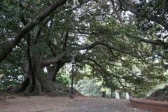 Romantische bomen Stock Fotografie