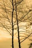 romantische boom gouden hemel Royalty-vrije Stock Foto's