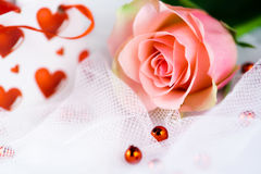 Romantische enige perfecte roze nam toe Royalty-vrije Stock Foto's