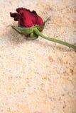Romantische Felder Stockbild