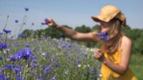 Romantische Frau ernten Kornblumeblumen im Blumenstrauß auf dem Gebiet 4K stock video