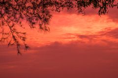 Romantische hemelboom royalty-vrije stock fotografie