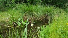 Romantische het Water van de Grasweide Stock Afbeeldingen