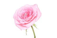 Romantische Hochzeitsringe auf rosafarbener Blume des Rosas Lizenzfreie Stockbilder