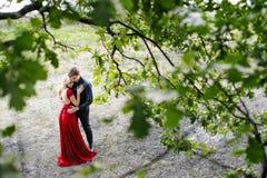 Romantische junge Paare, die unter einem Baum umfassen Stockfotos