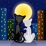Romantische katten Royalty-vrije Stock Afbeeldingen