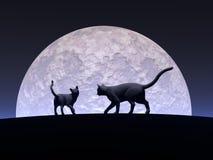 Romantische katten Stock Afbeeldingen