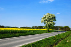 Romantische Landschaft lizenzfreie stockfotos