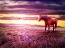 Romantische Landschaft mit Pferd Stockfoto
