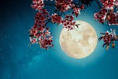 Romantische nachtscène - Mooie sakura van de kersenbloesem bloeit in nachthemel met volle maan Royalty-vrije Stock Foto's