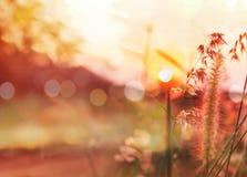 Romantische Naturansicht der Grasblume und -sonnenuntergangs für Valentinsgruß Stockbild