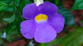 Romantische purpere bloemenillustratie als achtergrond stock afbeeldingen
