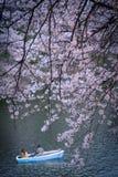 Romantische Riverboatfahrt unter rosa Bäumen Lizenzfreies Stockbild
