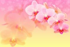 Romantische rosa Orchideenblumen auf blured Hintergrund Lizenzfreie Stockfotografie