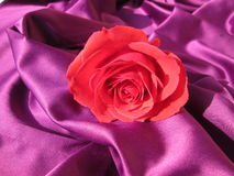 Romantische Rose Stockfoto