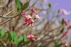 Romantische roze bloem stock afbeelding