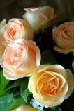 Romantische rozen Royalty-vrije Stock Afbeeldingen