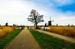 Romantische schitterende mooie mening van oude Nederlandse windmolens in het midden van duidelijke open gebieden royalty-vrije stock afbeeldingen