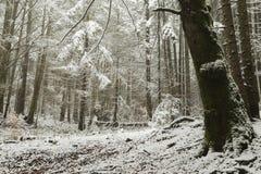 Romantische scène in een bos tijdens de winter Stock Afbeeldingen