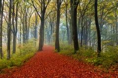 Romantische Spur im Wald während des Herbstes Stockfotos