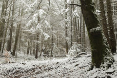 Romantische Szene in einem Wald während des Winters Stockbilder